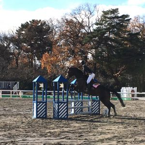2012dec_horsetrial06